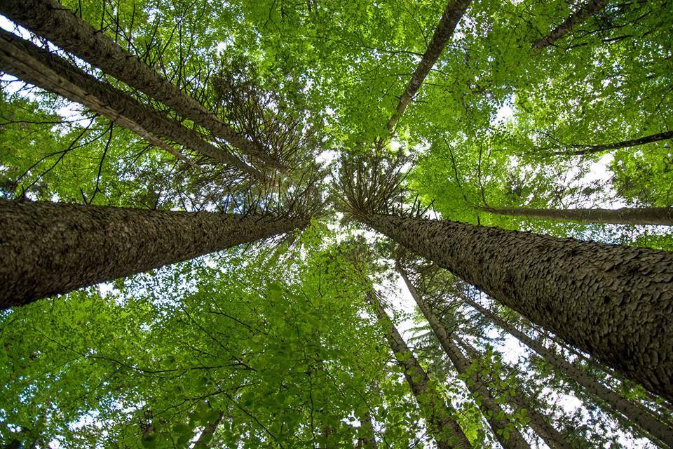 Concluye el estudio de FSC para lograr bosques más resistentes al cambio climático