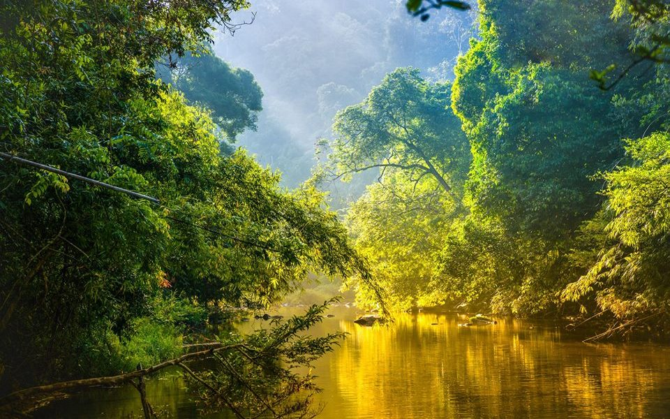 PEFC lanza una nueva edición de su concurso internacional de fotografía