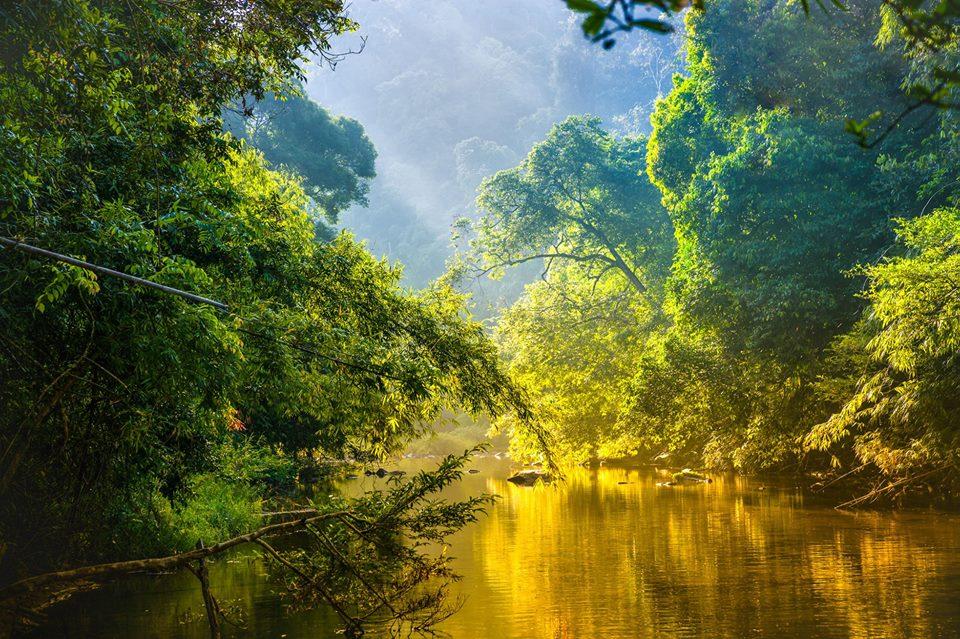 La diversidad biológica de la Cuenca del Congo puede preservarse con la gestión forestal sostenible