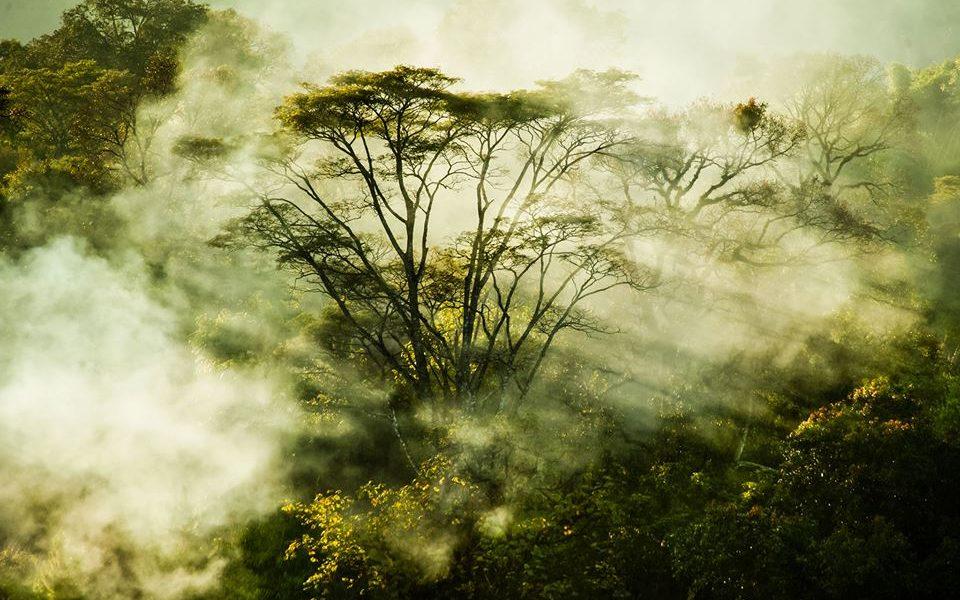 ¿Y si la gestión sostenible de los bosques tropicales fuera una oportunidad para el planeta?