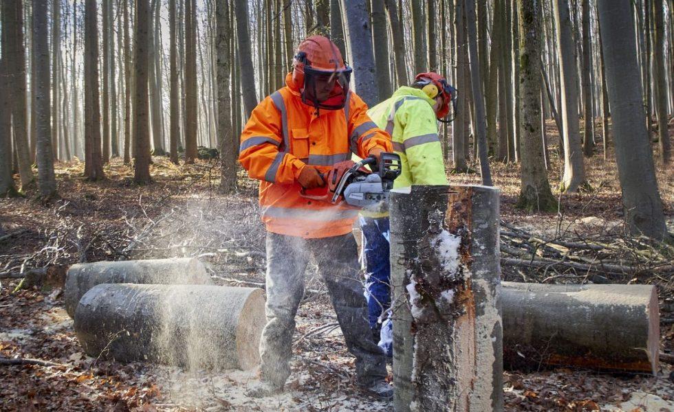FSC oferta un curso gratuito para personas desempleadas interesadas en la industria forestal de Galicia