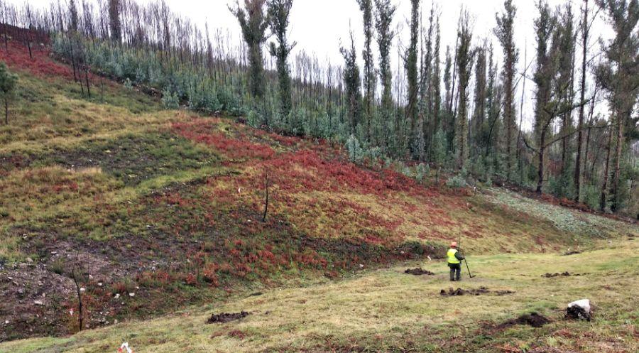 FSC y CARREFOUR promueven cortafuegos verdes que ayudarán a luchar contra los incendios forestales