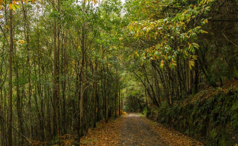 Acuerdos de custodia del territorio en bosques FSC de Galicia y Asturias