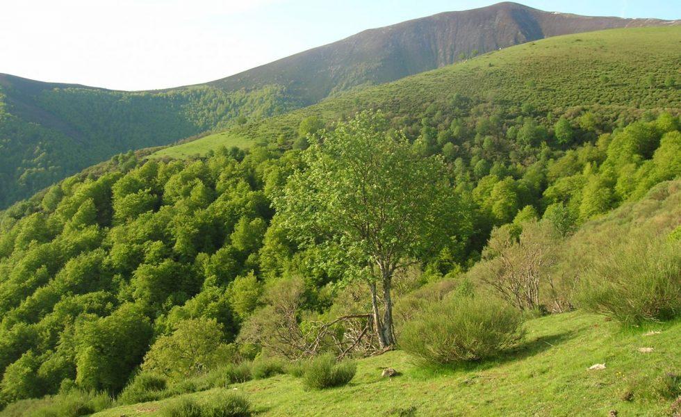 Decálogo de propuestas para impulsar la gestión forestal frente a los retos de la despoblación y el cambio climático