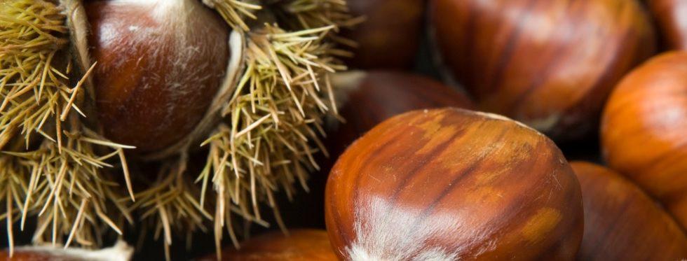 La Red Estatal del Castaño consigue que el MAPA autorice el Torymus sinensis