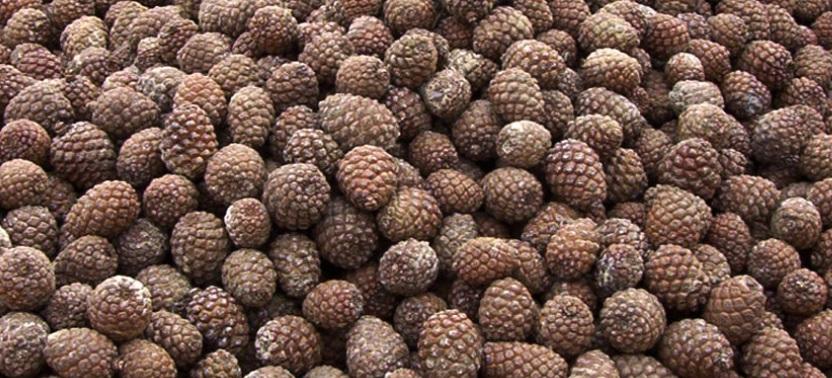 Jornada en la UVA sobre frutos y frutos secos en tiempos de nuevas plagas y cambio climático