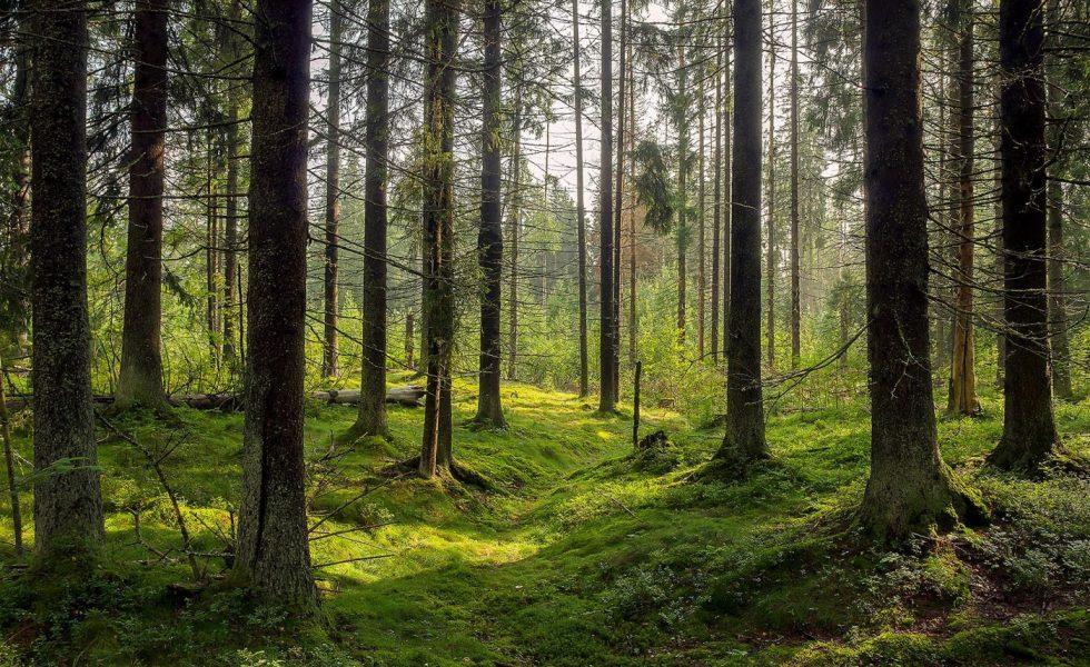 ROSEWOOD busca nuevas herramientas para mejorar la gestión de los montes de propiedad privada