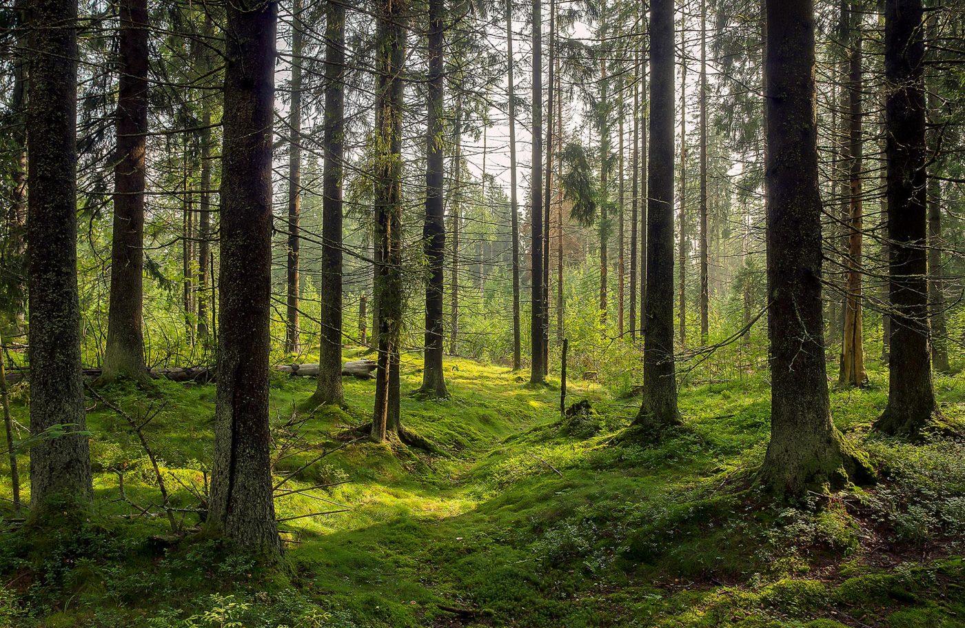 CESEFOR presentará las buenas prácticas de movilización sostenible de madera vistas en el proyecto ROSEWOOD