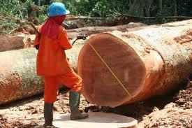 Tan solo el 16% de los productos de madera de importación proceden de zonas de riesgo