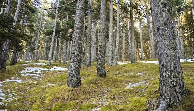 COFORESTA denuncia la falta de representación del sector forestal en la planificación del desarrollo rural en Aragón
