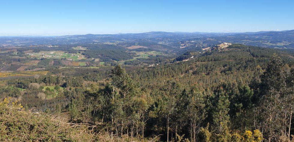 JUNTOS POR LOS BOSQUES recuerda la gran contribución de los bosques a la biodiversidad y el bienestar de la sociedad