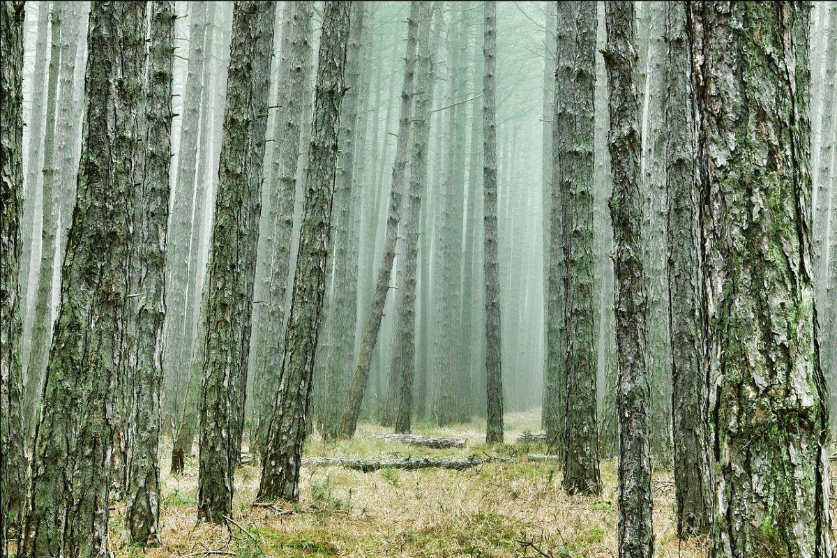 Un nuevo proyecto científico de FSC ayudará a la industria de la madera a adaptarse al cambio climático