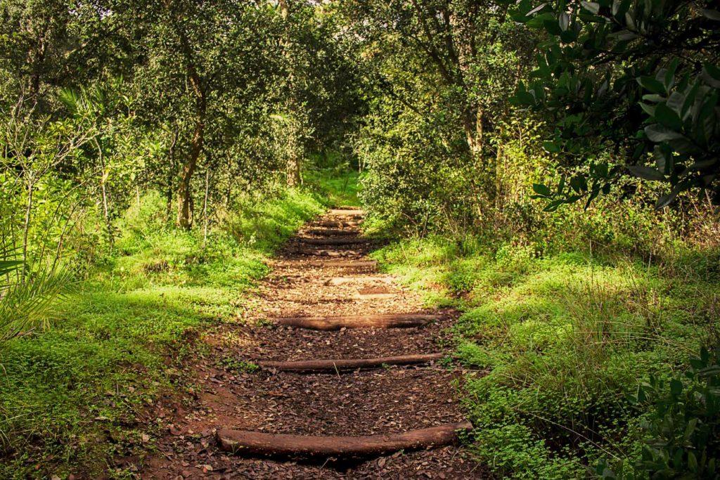 Gran Canaria celebra su Noviembre Forestal