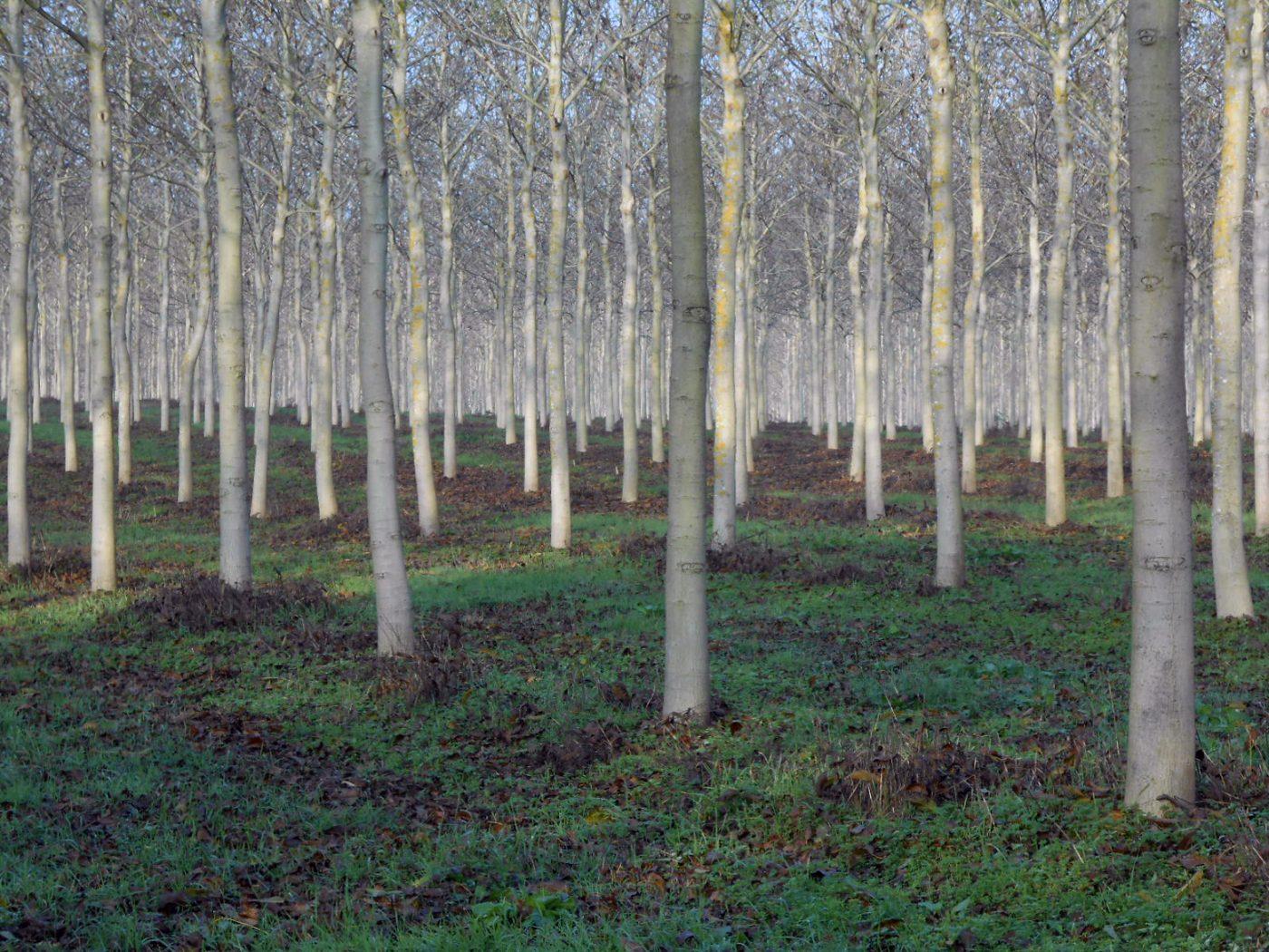 Emergencia climática, reforestar nunca fue tan importante