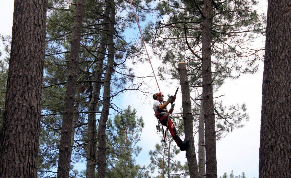 Cascos de protección integrales para los trabajos forestales en TECNICA FORESTAL
