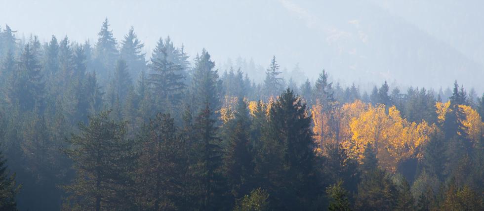 TRANSFORMAD elabora madera que proviene de bosques sostenibles