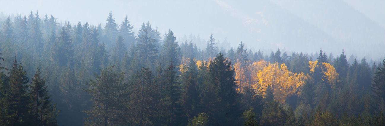 Nuevo estudio aborda cuestiones clave sobre los bosques en la UE
