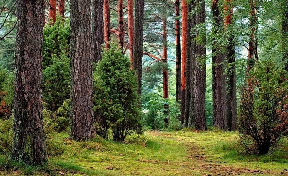 AIBRIM: Aprovechamiento Integral de la Biomasa Residual de la Industria de la Madera