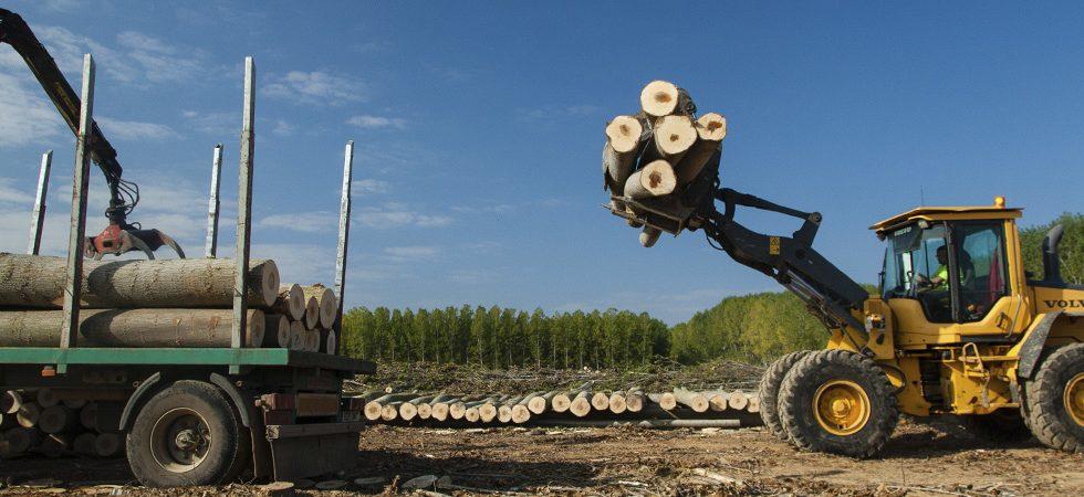 Consorcios forestales, una oportunidad para el mundo rural