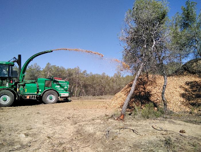 Ingenieros Técnicos Forestales e Ingenieros de Montes critican la indefinición del Ministerio para la Transición Ecológica