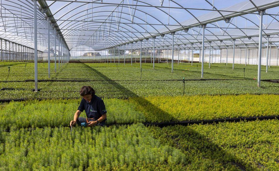 VIVEROS MAÑENTE explica cómo mejorar la productividad de las plantaciones de eucalipto