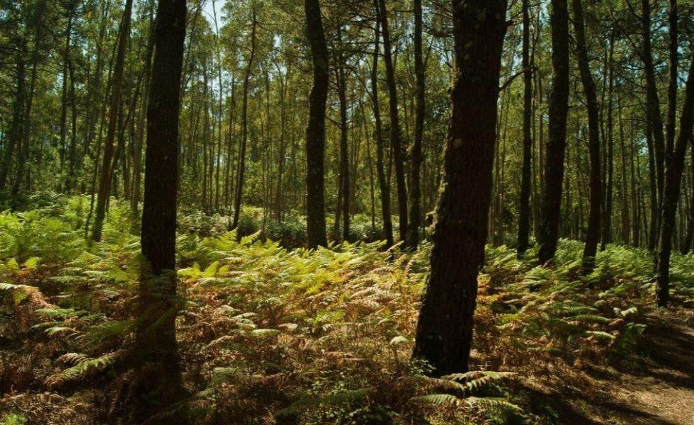 Galicia acredita el almacenamiento de más de 100.000 toneladas de carbono en sus bosques