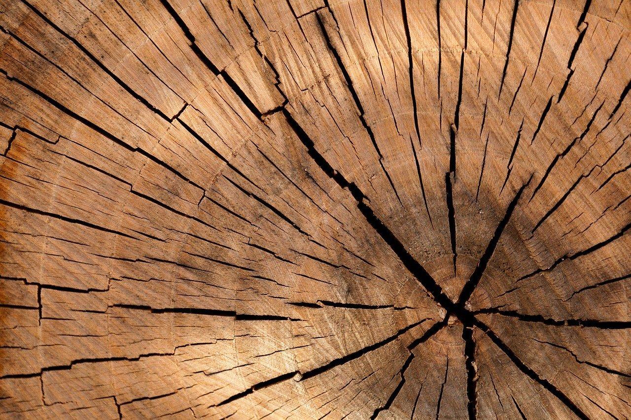 ¿Qué tipos de sierras existen para madera?
