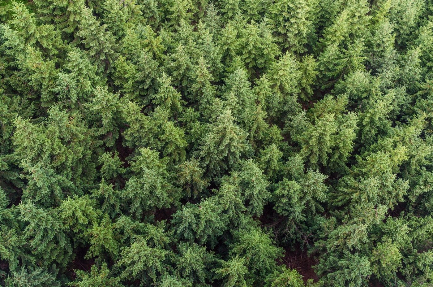 La madera de los montes generó en España más de 110 millones de euros en el 2019