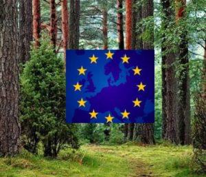 Venta de la patente de un aditivo ecológico obtenido de la biomasa