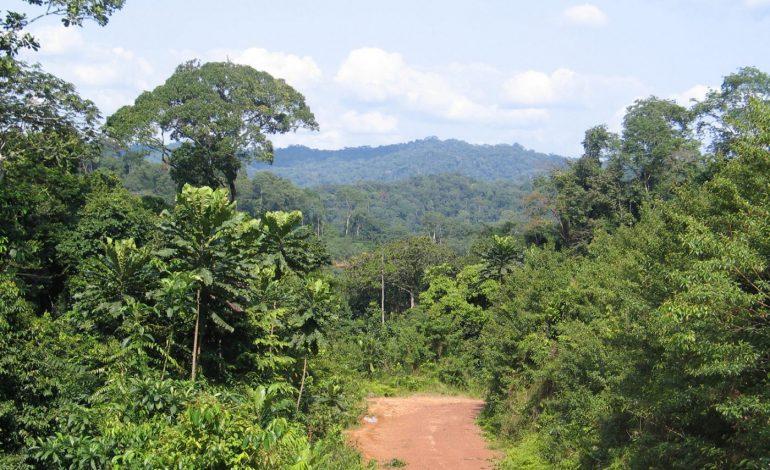 Impacto del Covid 19 en el comercio de madera tropical