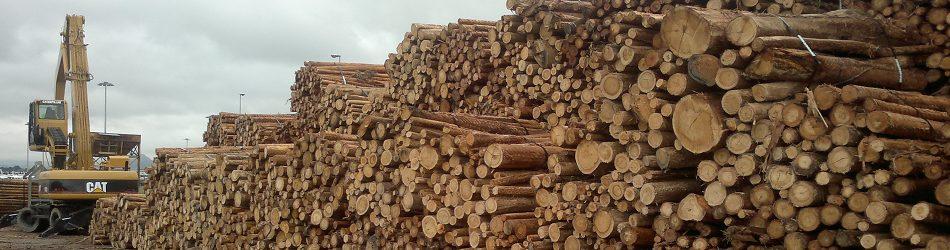 CHAINWOOD suma capacidades del sector maderero y forestal con empresas y centros tecnológicos