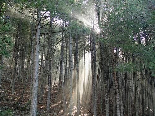 Tiempos difíciles para el sector forestal