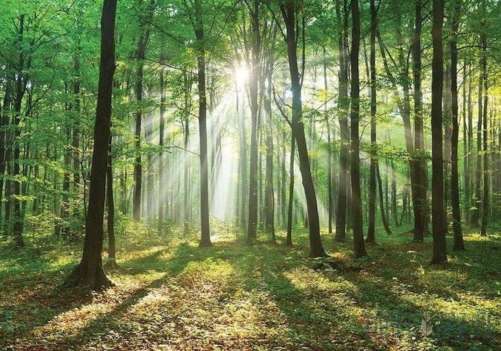 El valor actual de los bosques mundiales oscila entre los 50 y los 150 billones de dólares