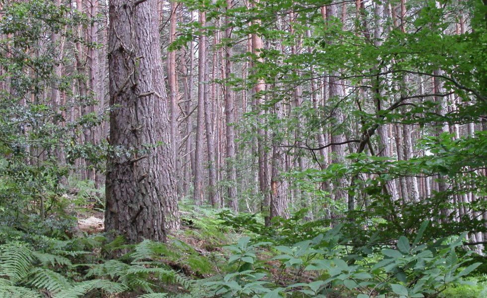 Los bosques españoles son una de las grandes oportunidades de futuro que tenemos