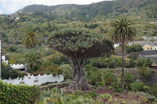 España tiene 1.680 árboles monumentales o singulares