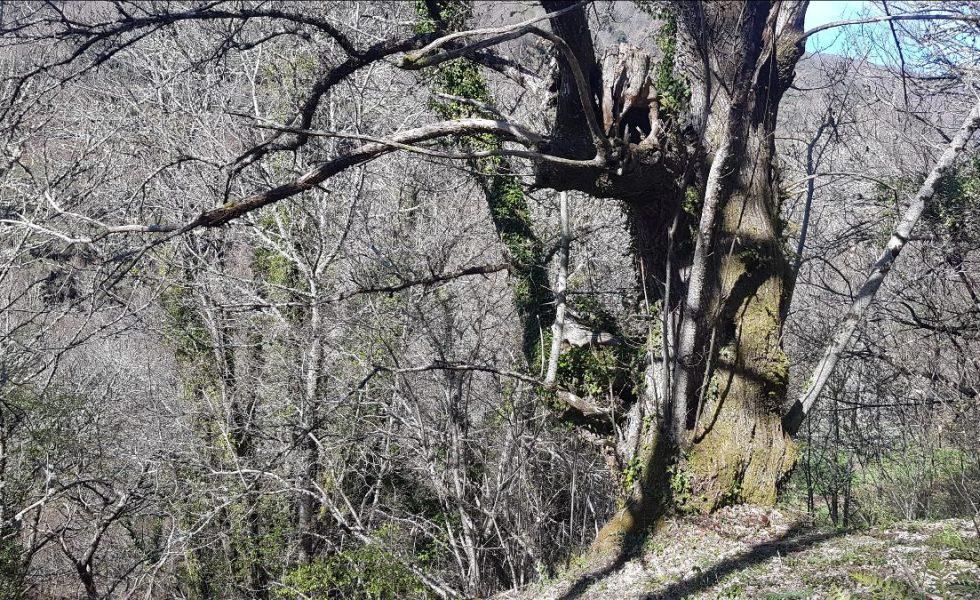 Un bosque singular de Lugo, primero en España en lograr la certificación FSC