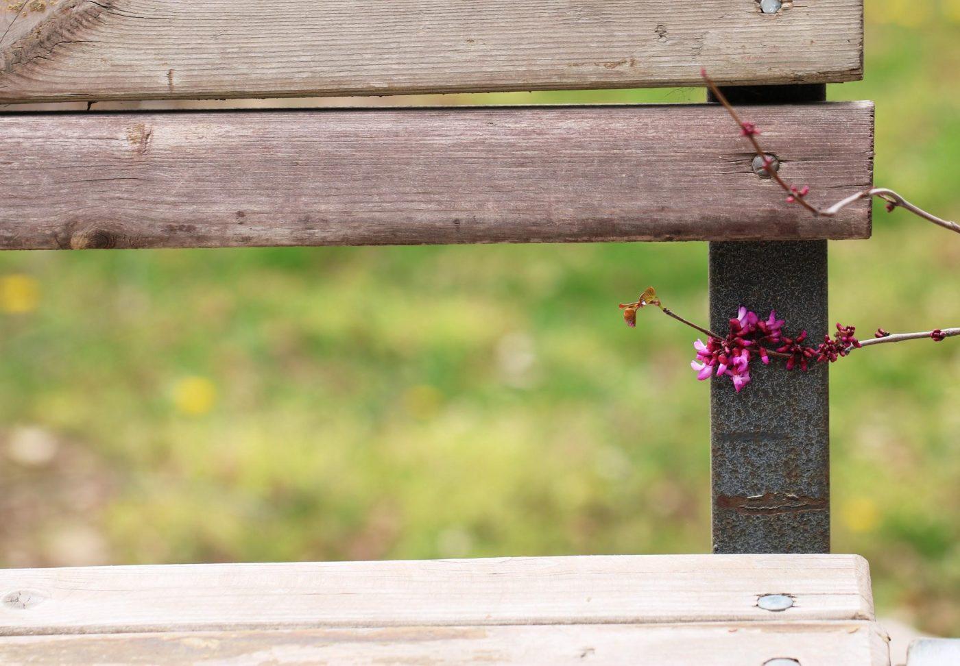 Insectos que comen madera y cómo evitar el desgaste de tus muebles