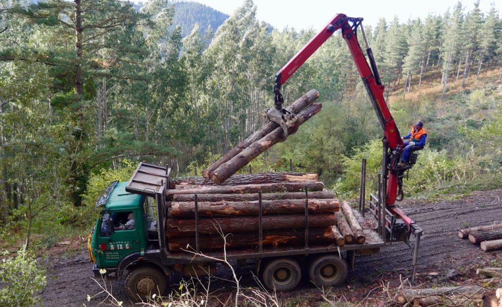 El sector forestal-madera del País Vasco mantiene sus actividades esenciales para garantizar la producción de papel, biomasa y embalaje
