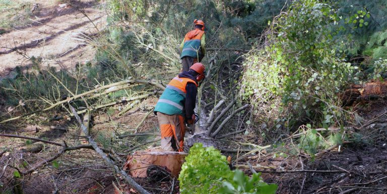 El COLEGIO OFICIAL DE INGENIEROS DE MONTES DE ARAGON pide retirar el documento de avance del Plan Forestal