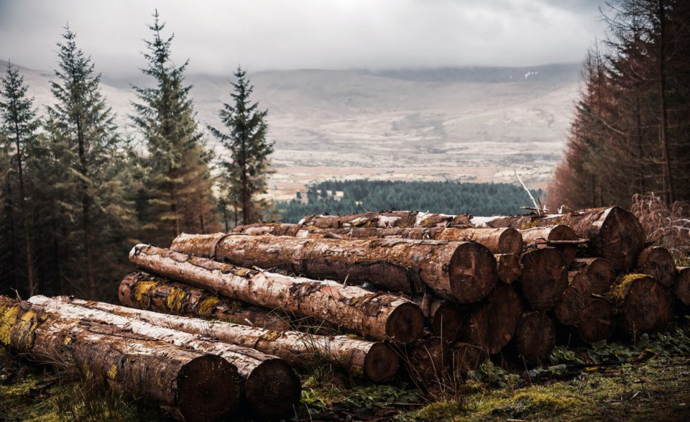 Cae un 40% el volumen de madera licitada de montes públicos en el primer trimestre