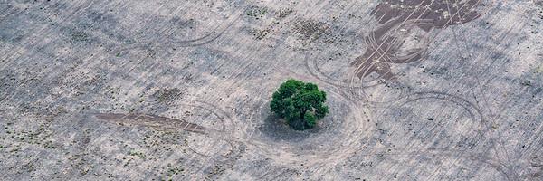Menos bosques es igual a más enfermedades