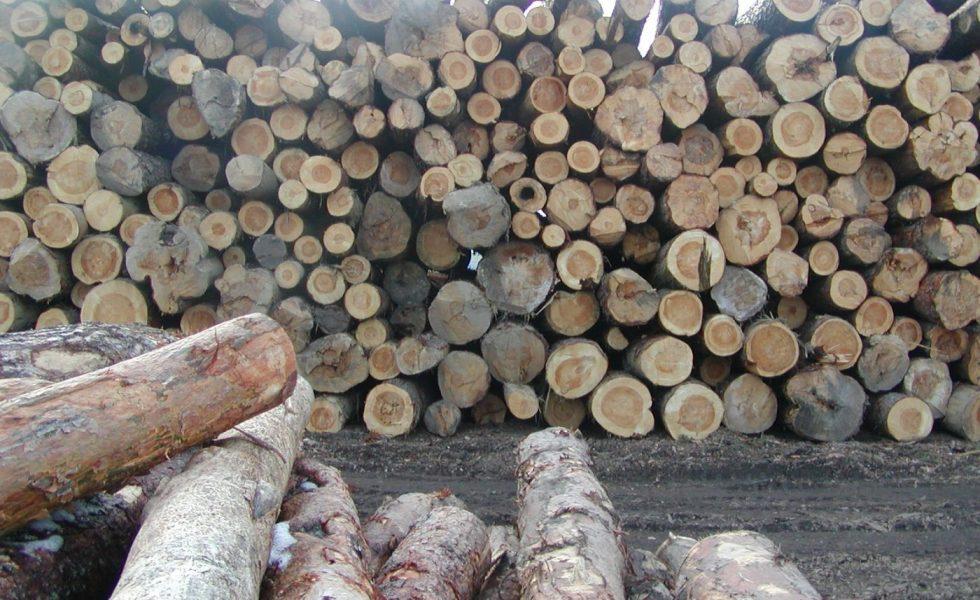 El impacto de COVID‐19 en el mercado europeo de la madera