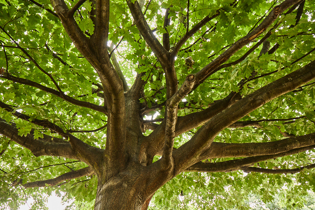Demostrando la sostenibilidad de la madera de frondosas estadounidenses