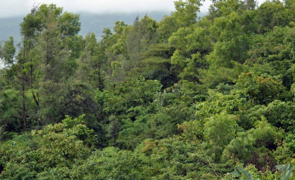 PEFC cerró 2019 con un total de 2,3 millones de hectáreas de bosque certificado