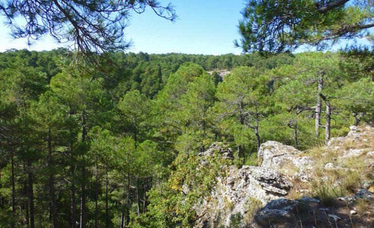 Castilla-La Mancha recibe el primer certificado internacional FSC por su gestión en el monte Los Palancares