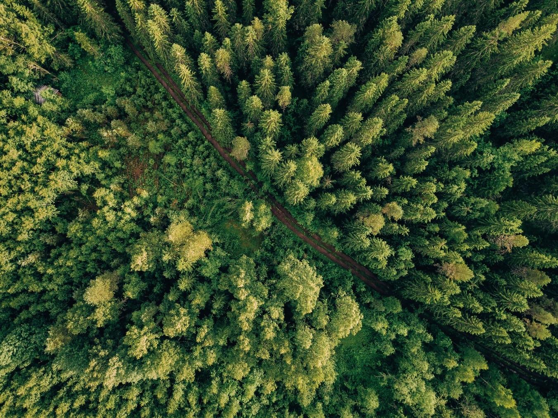 El rebarnizado de las superficies de madera noble y resilientes reduce la huella de carbono en más del 75 %