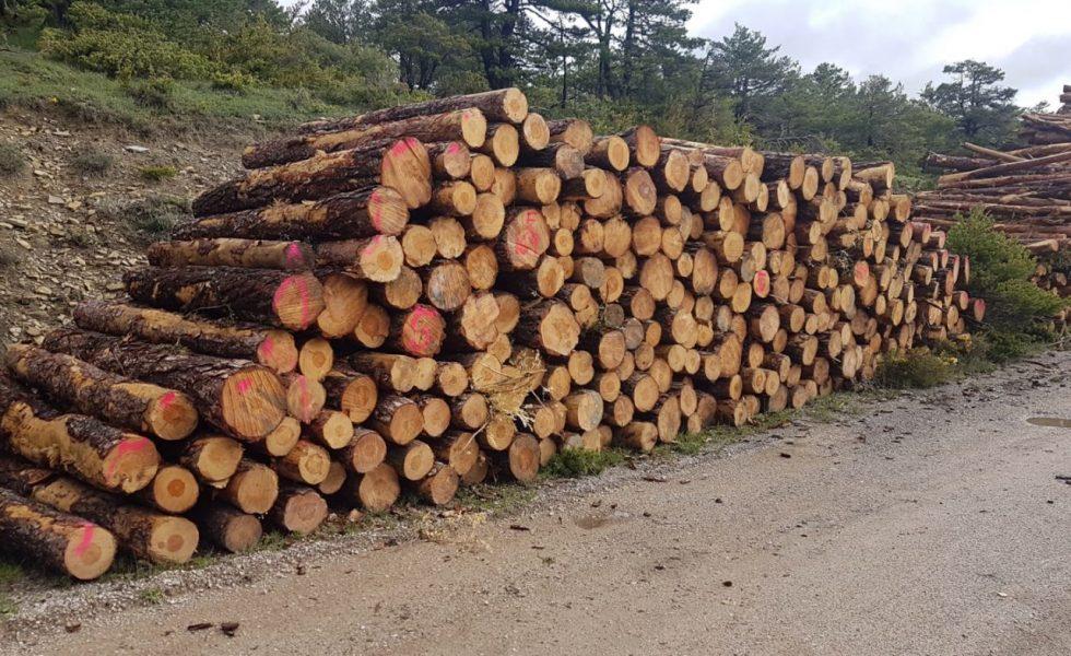 Rentabilizar la gestión forestal para evitar el abandono del monte, mediante las agrupaciones y una fiscalidad incentivadora