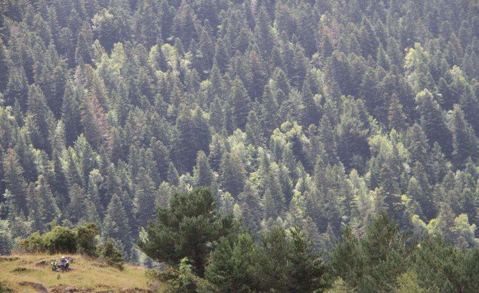 FSC España destaca que la vida en la Tierra no sería posible sin los servicios que nos proporcionan los bosques