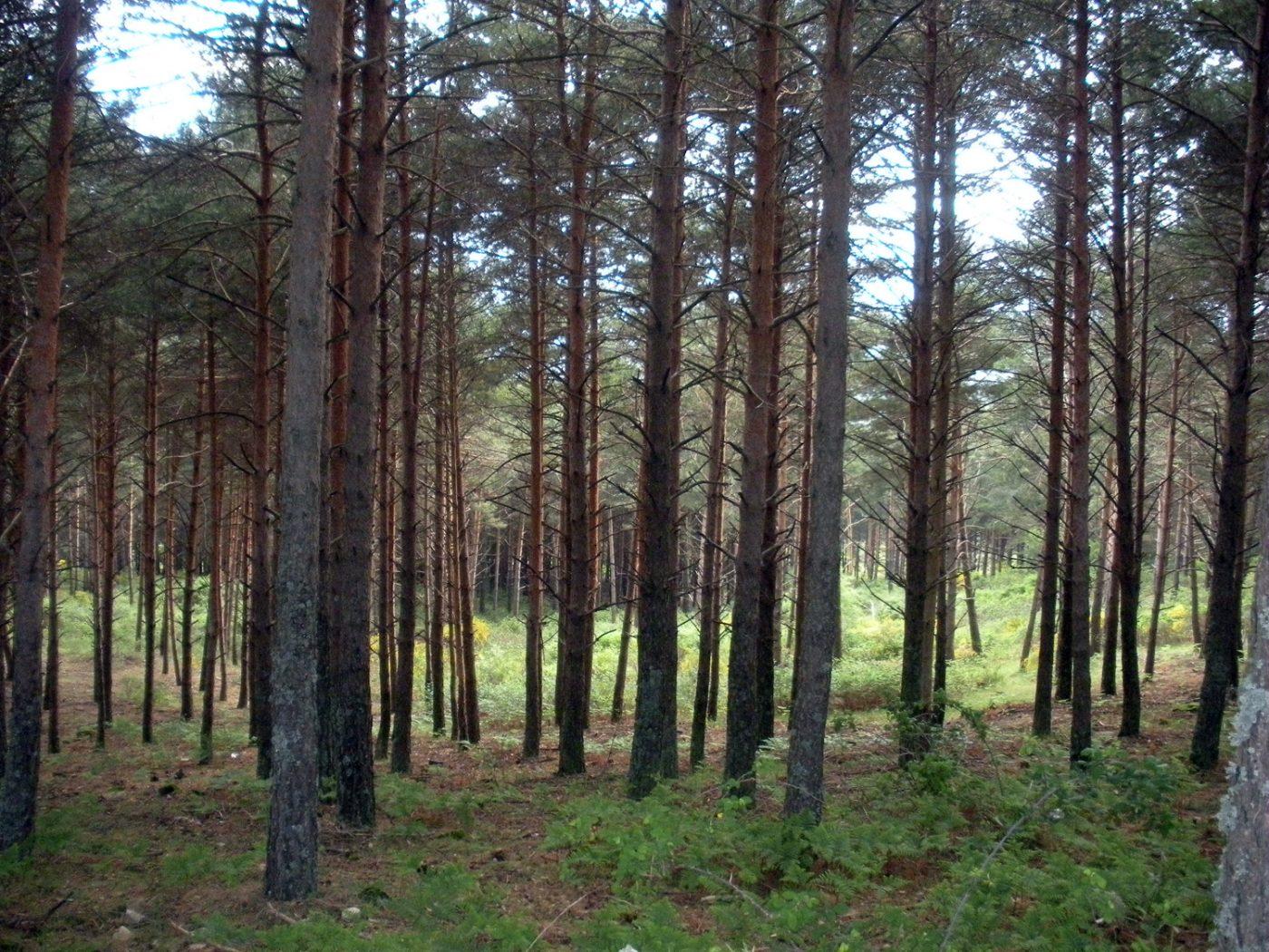 Castilla-La Mancha fomenta la certificación forestal de los montes públicos