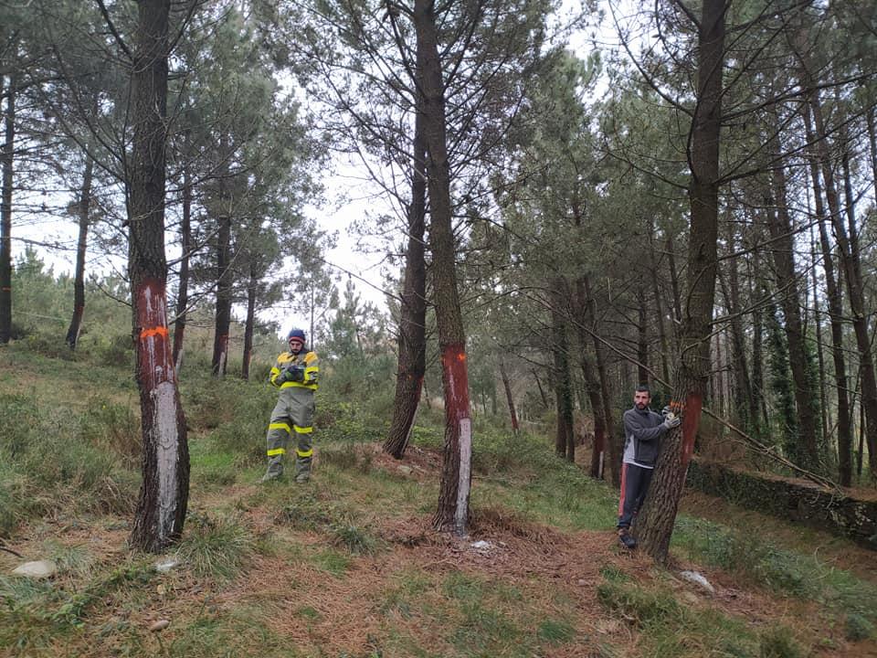 Varias comunidades de montes de Galicia participan en la mecanización del sector resinero